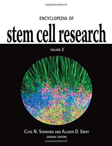 Encyclopedia of Stem Cell Research (2 Vol.Set) - Clive N. Svendsen; Allison D. Ebert