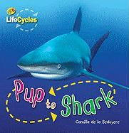 Pup to Shark