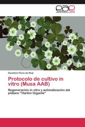 Protocolo de cultivo in vitro (Musa AAB) - Regeneración in vitro y aclimatización del plátano